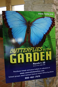 """Shortly after we arrived, we went to see the """"Butterflies in the Garden"""" exhibit at the Fort Worth Botanic Garden."""