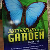 "Shortly after we arrived, we went to see the ""Butterflies in the Garden"" exhibit at the <a href=""http://www.fwbg.org/"">Fort Worth Botanic Garden</a>."