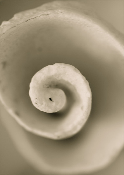 """I came as an eggshell,<br />   will leave as a salamander.""<br /> © Elizabeth Christopher 2006"