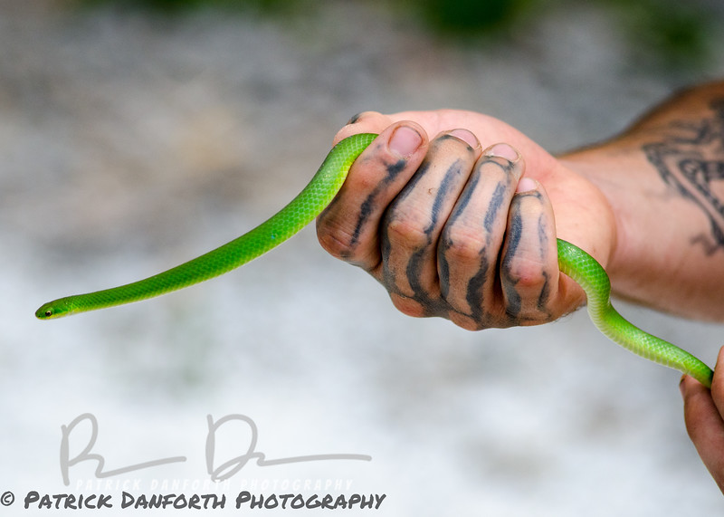 Zack with a Snake