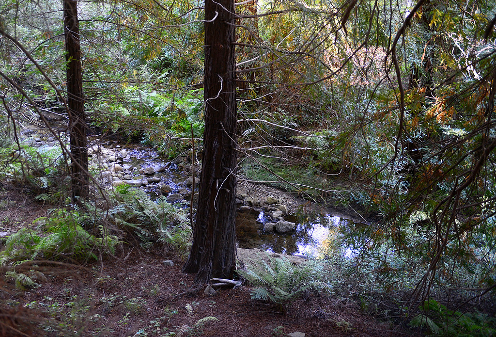 . San Jose Creek runs through the Point Lobos Ranch property on Wednesday, September 12, 2018.  (Vern Fisher - Monterey Herald)