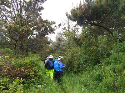 Wilderness Volunteers: 2017 Point Reyes National Seashore (California) Service Trip