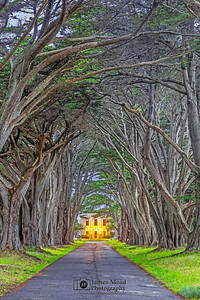 """Tunnel of Time,"" Cypress Tree Tunnel at Dusk, Point Reyes National Seashore, California"