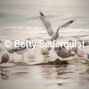 Painterly View of Gulls