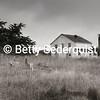 Old Farmhouse, Point Reyes