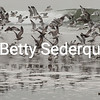 Gulls on Beach, Drakes Bay, Point Reyes