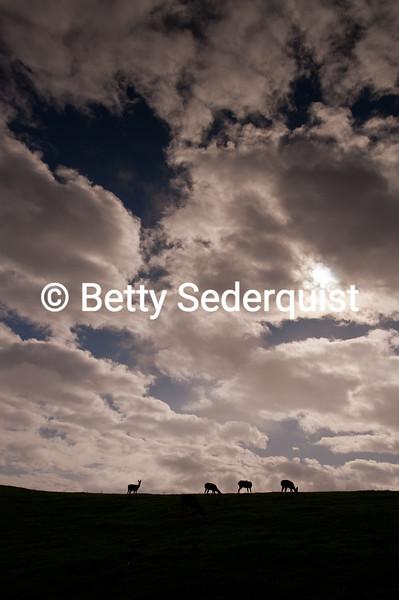 Deer and Sky