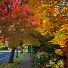 My Neighborhood - Oregon Fall Foliage