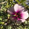 Bikepath Flower