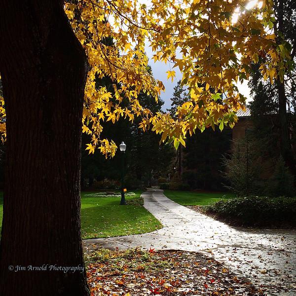 Leaves & Light