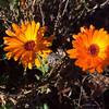 Bikepath Flowers