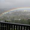 Larkspur Rainbow