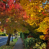 My Neighborhood - Oregon Fall Foliage