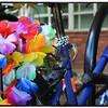 Blooms on a Bike