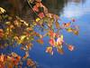 611 leaves against water