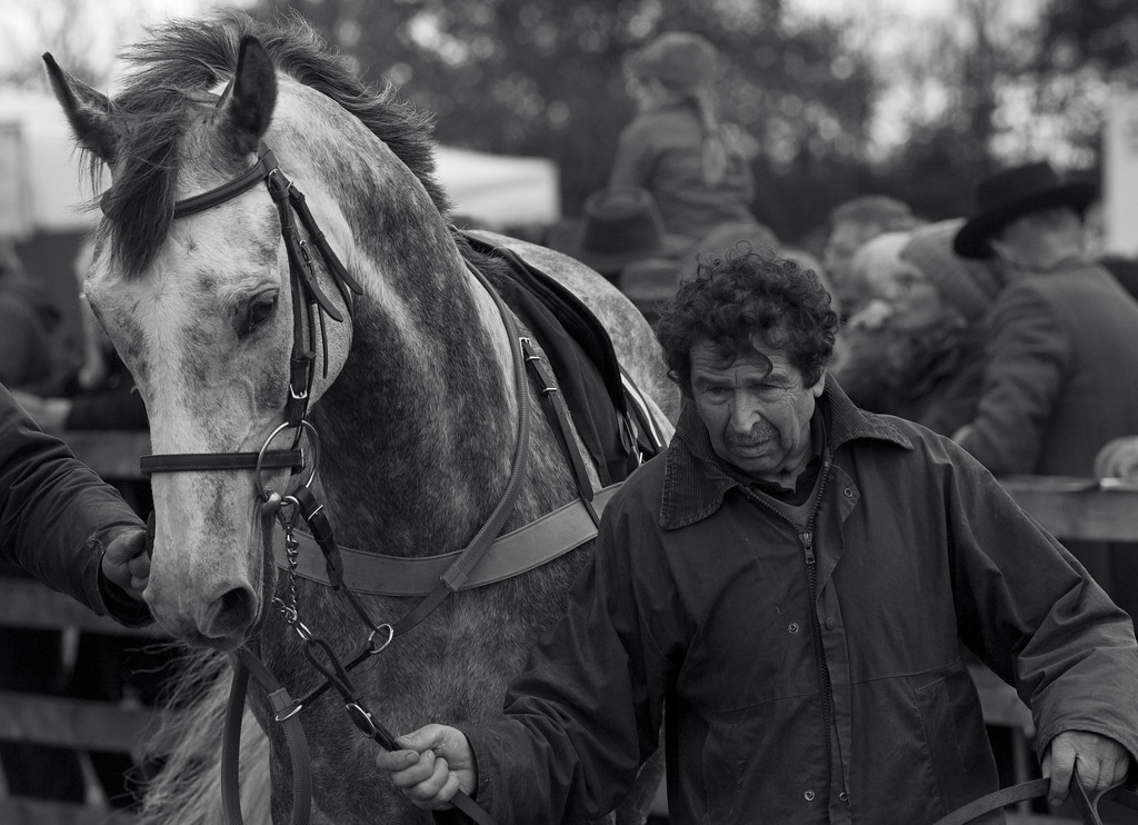 Parade ring, Mollington point-to-point