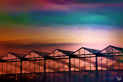 Pink Greenhouses