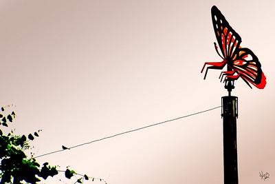 Butterfly Revenge