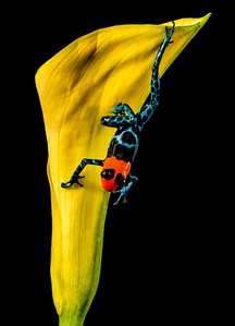 Frogscapes062_Cuchara_3487_021517_130708_5DM3L