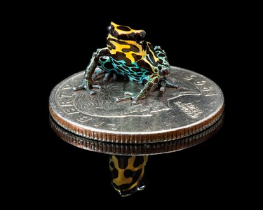 Frogscapes044_Cuchara_1343f2_052814_151038_5DM3L