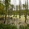 Wydminskie lake, Poland