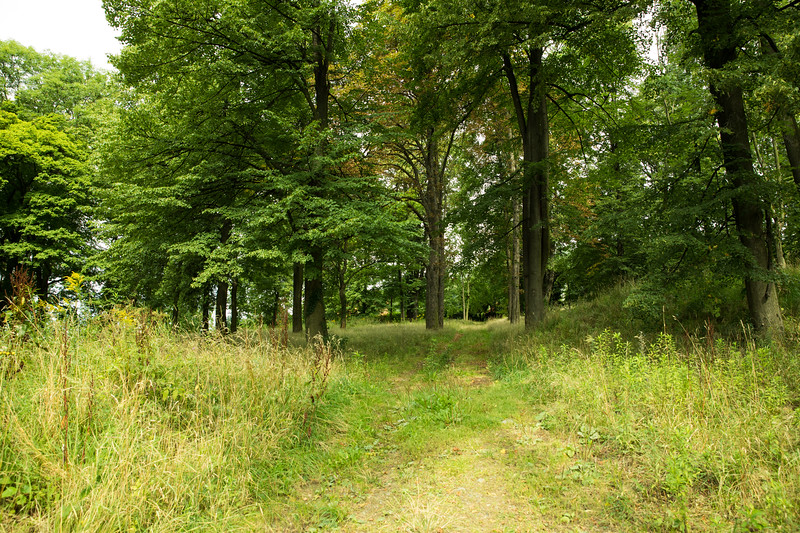 Old Prussian/German cemetery remains in Jezow, Poland