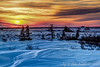 Sunset on the Taiga (HDR) - Polar Bears and Northern Lights - Churchill, Manitoba, Canada - Jay Brooks - November 2012