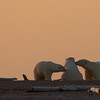 mother and her two cubs nuzzling at sunrise