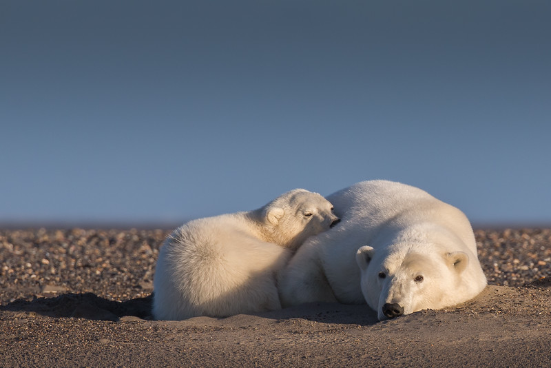 mother and cub laying in a sand den