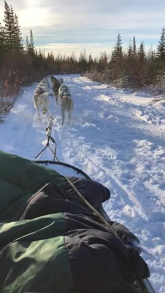 Dog Sledding in Churchill, Canada