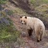 Black bear? #3