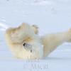 Polar bear breakdancing
