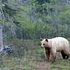 Black bear? #2