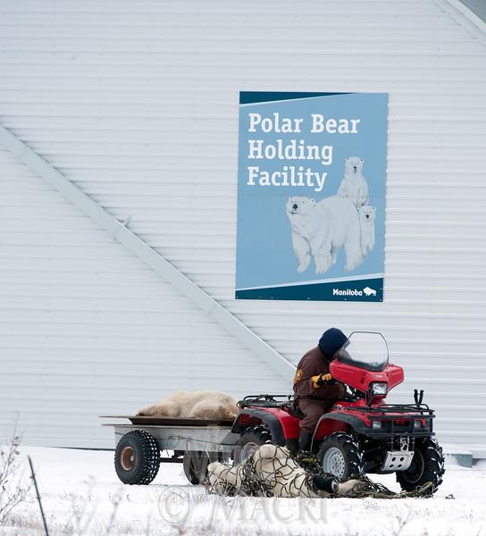 Bear Jail
