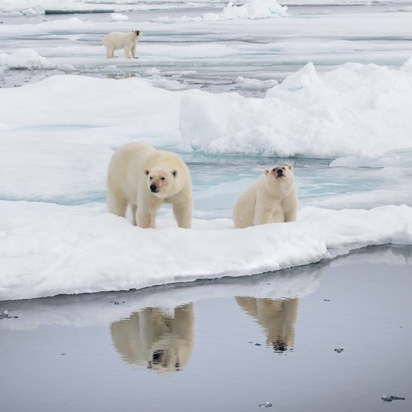 We watched the family for a couple of hours as they walked around on the ice