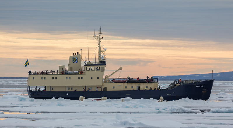 Our sister ship, the M/V Freya, arrived to see the action.   They were also able to get close to the carcass by drifting to the edge of the ice floe