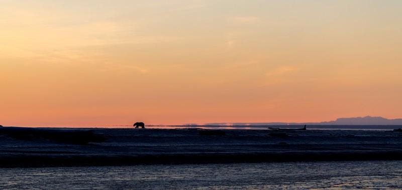 Sunrise bear.