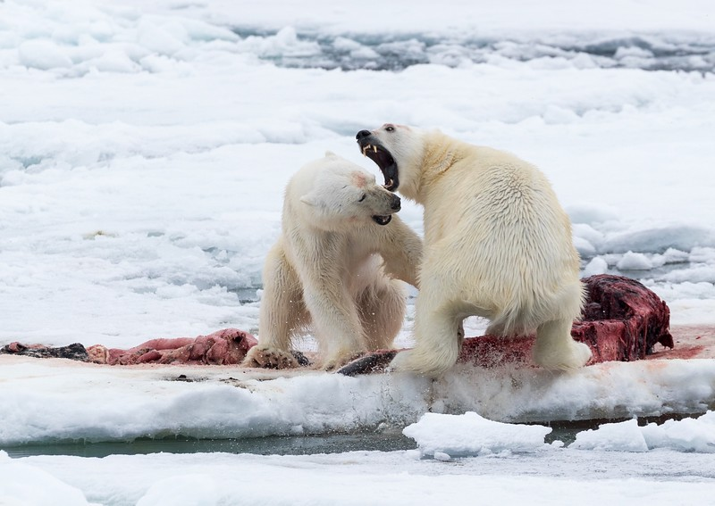 Fighting over the carcass