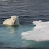 Polar bear plunge pool?