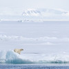 Peeping round the ice