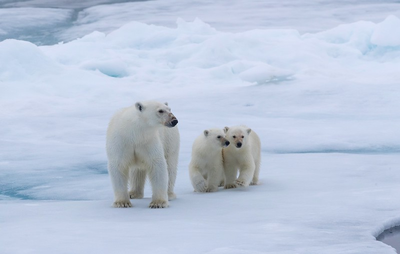 This was our third different mother with two cubs-of-the-year