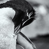 BNW Rock Hopper