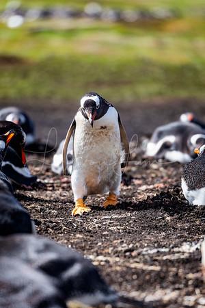 Penguin Alley