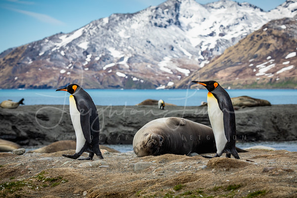 Penguins and Seals