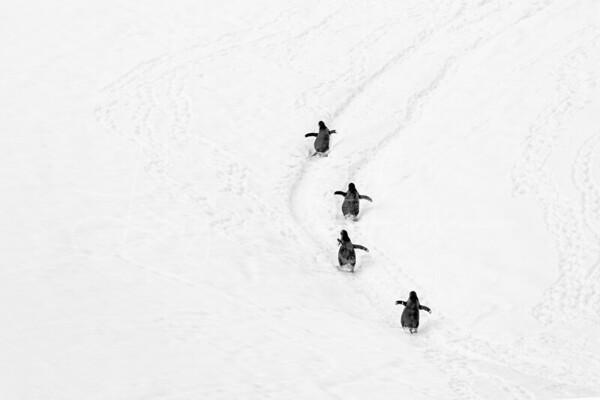 Penguin Highway copy