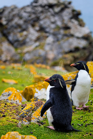 Rock Hopper posing