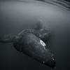 Whale Tail BNW