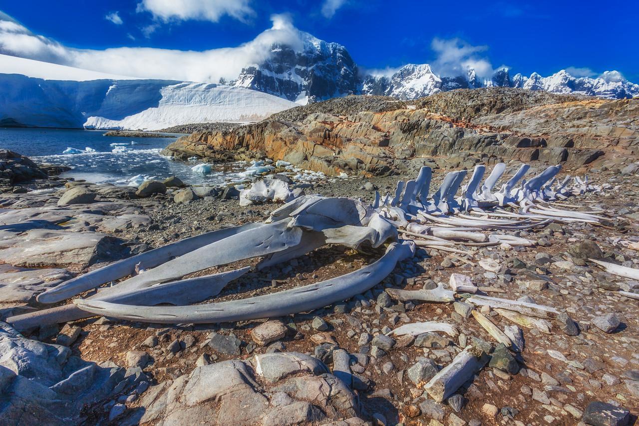 whale bones antarctica