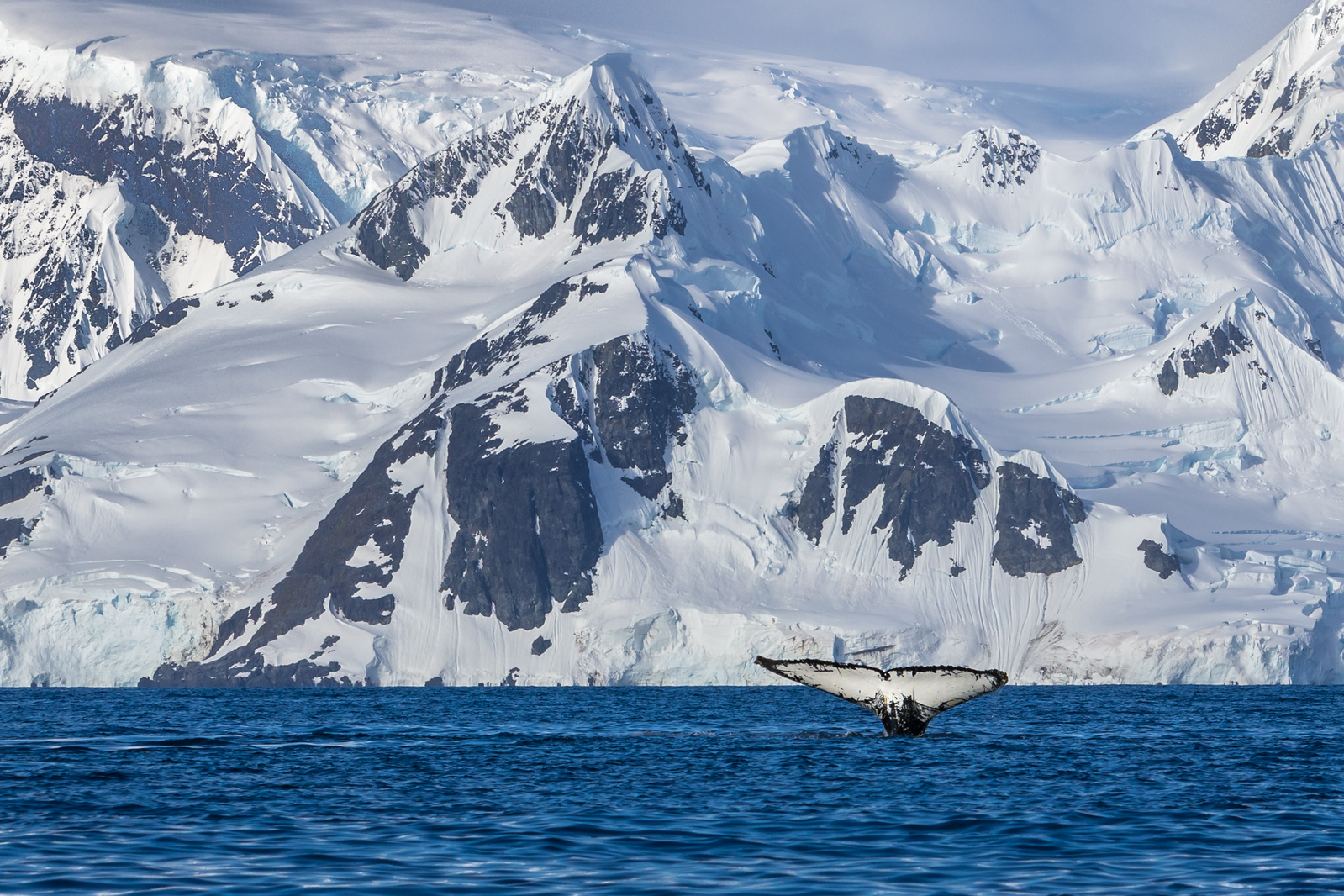 Whale diving in Antarctic Waters