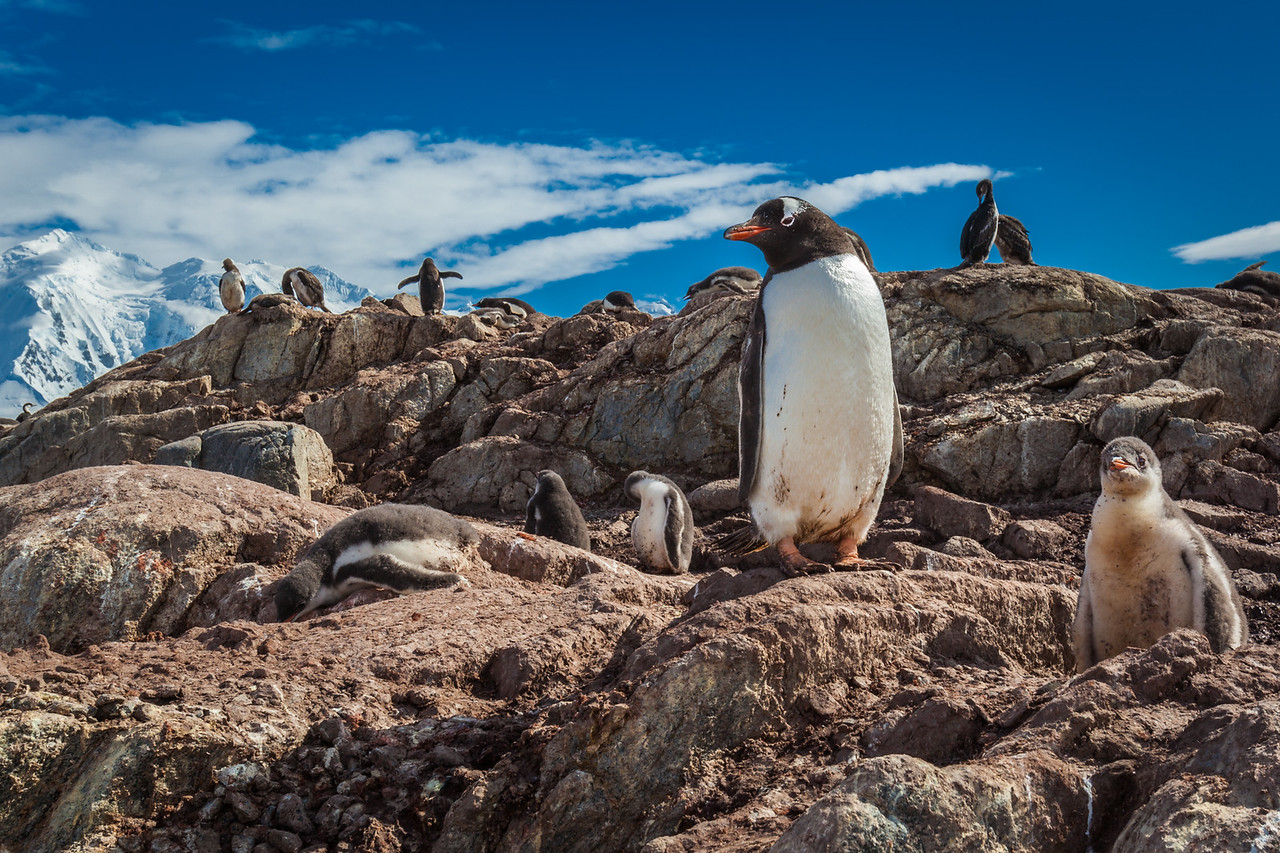 mother and baby penguin Antarctica
